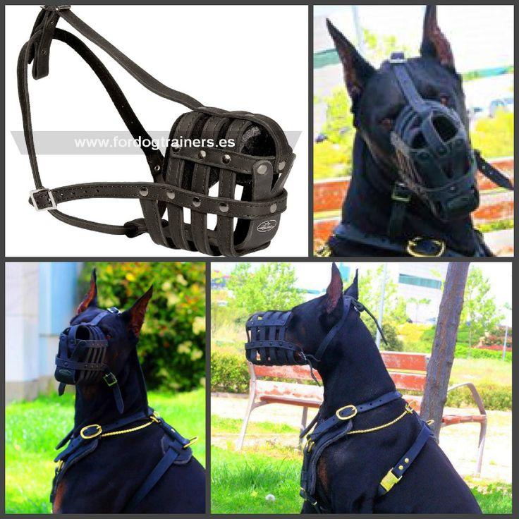 Ligero bozal tipo cesta, fabricado de cuero negro elegante, permite al perro entreabrir la boca y jadear. Ref. M41. Precio 26 euros. Apto para perros de todas las razas. Ver más https://fordogtrainers.es/index.php/bozales/bozal-canino-tipo-cesta-de-tiras-de-cuero-maxima-seguridad-detail. Fotos del famoso Berus Quake de Thaveys.  #bozal_tipo_cesta #bozal_de_cuero #bozal_para_perros #bozal_canino #berus_quake
