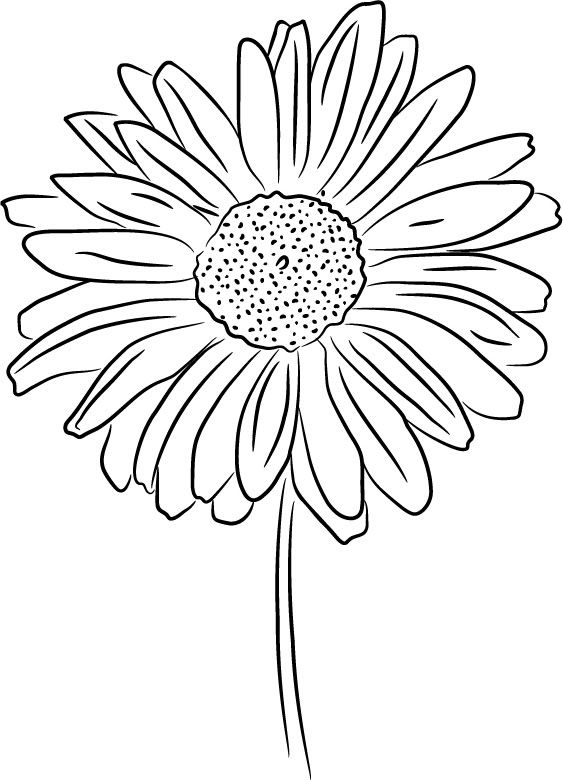 Daisy Flower Line Drawing : Best images about flower line drawings on pinterest