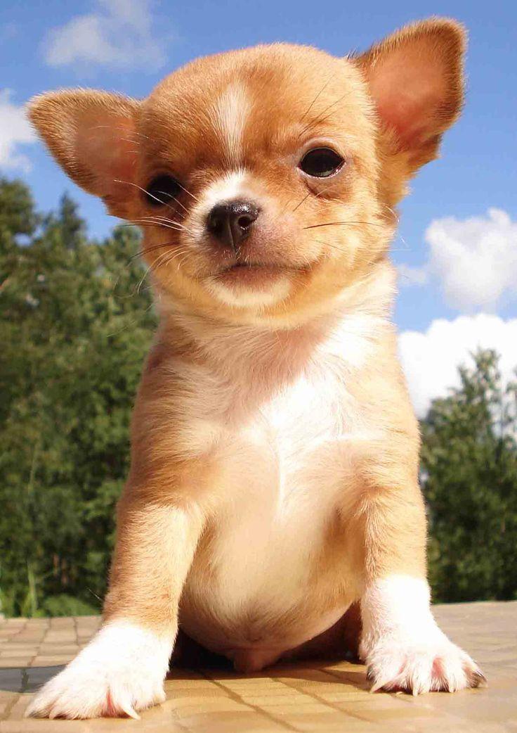имеющимся данным, картинки для маленьких собака помимо