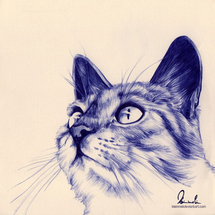 Another beautifully gorgeous cat drawn entirely in ballpoint pen! Wow