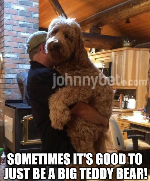Johnnybet