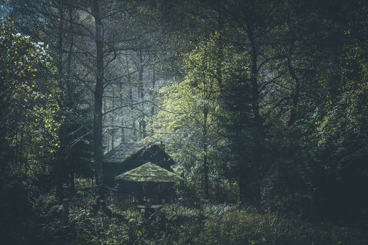 Untitled by Milena Gjorgjevska #cabin #forest #nature #photography
