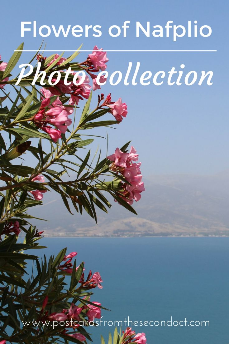 A collection of photos of the flowers of Nafplio, Greece