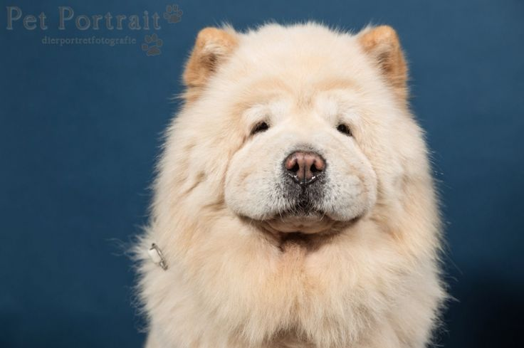Hondenfotograaf Amsterdam - PetPlan Winner actie - Honden op de Winnershow-21