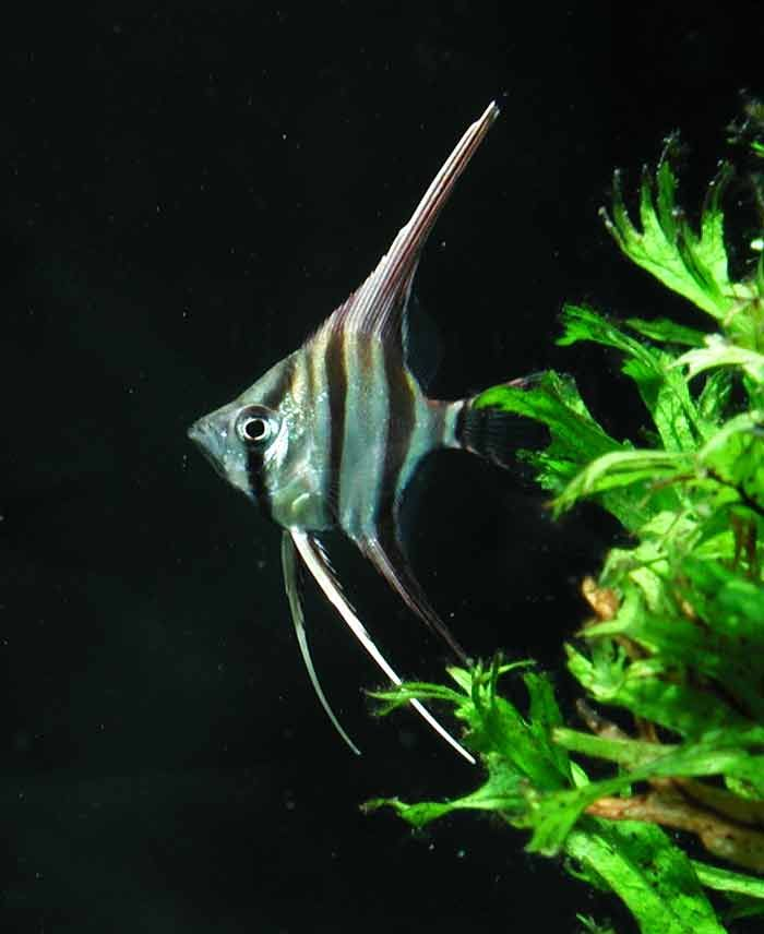 1000+ Images About Fish Fish Fish On Pinterest