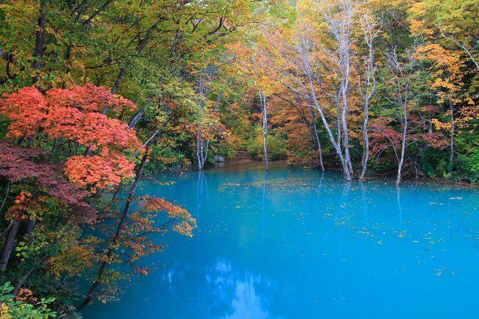 いまだになぜ青くなるのかが解明されていないという不思議な池、青池。白神山地の十二湖のうちの一つです。 日によって青の見え方も変わるので、何度でも訪れてほしいスポット。