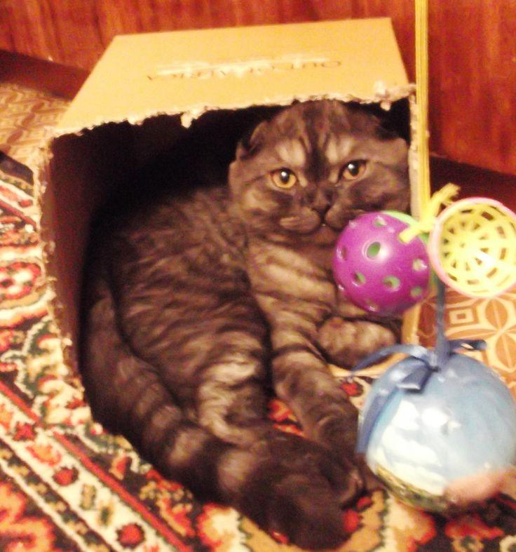Уютная любимая коробка