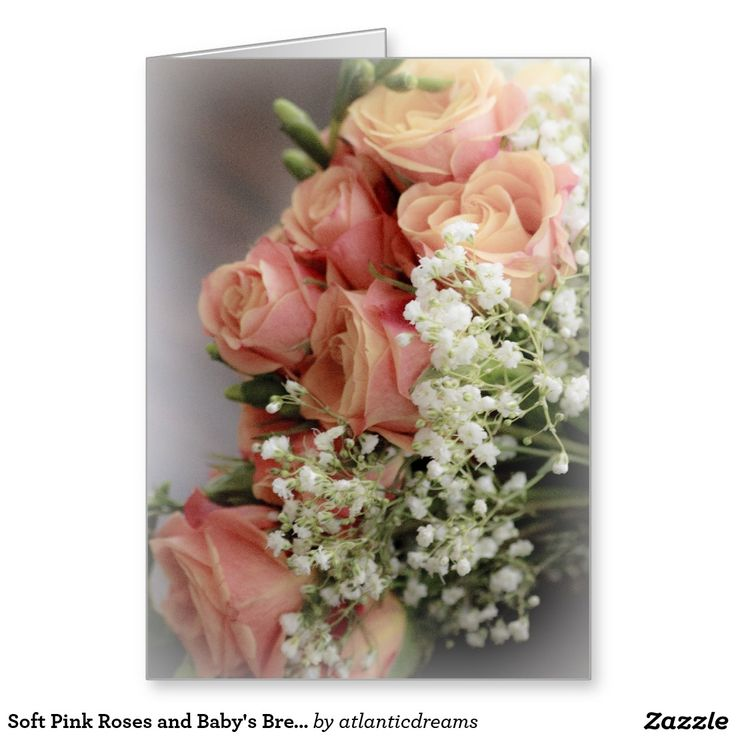 Soft Pink Roses and Baby's Breath Stationery Note Card