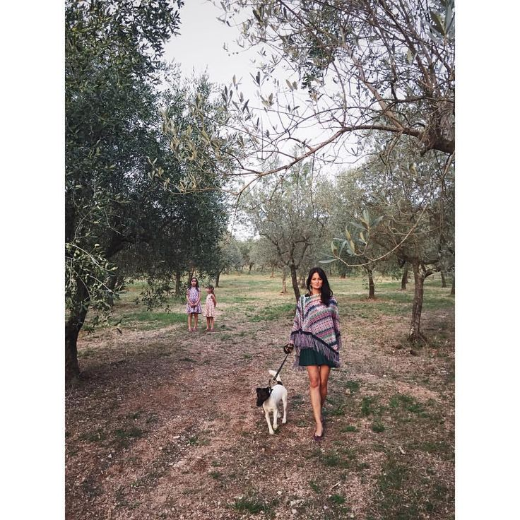 In the olive grove... olive trees, everywhere. So much beauty. #trevi #italy