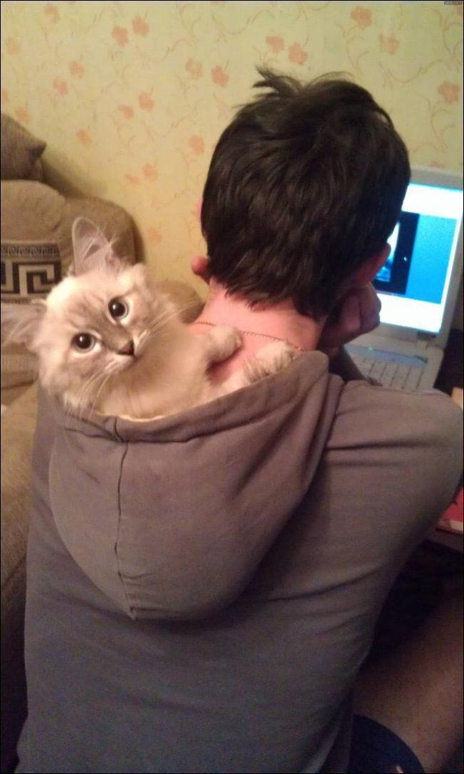 La chat-puche