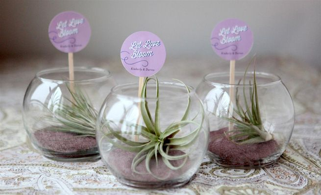 Mini Terrariums, these are made with air plants