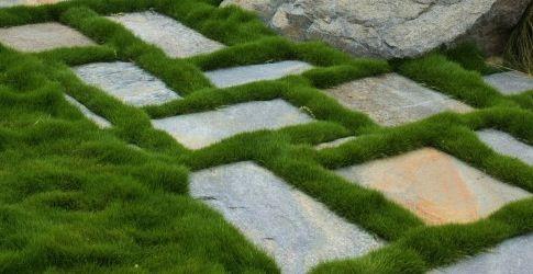 Korean velvet grass (no mow grass), Zoysia Tenuifolia - for outdoor shower area.