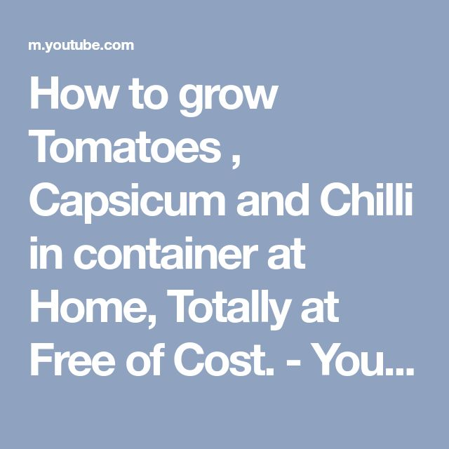 How to grow Tomatoes , Capsicum and Chilli in container at Home, Totally at Free of Cost. - YouTube