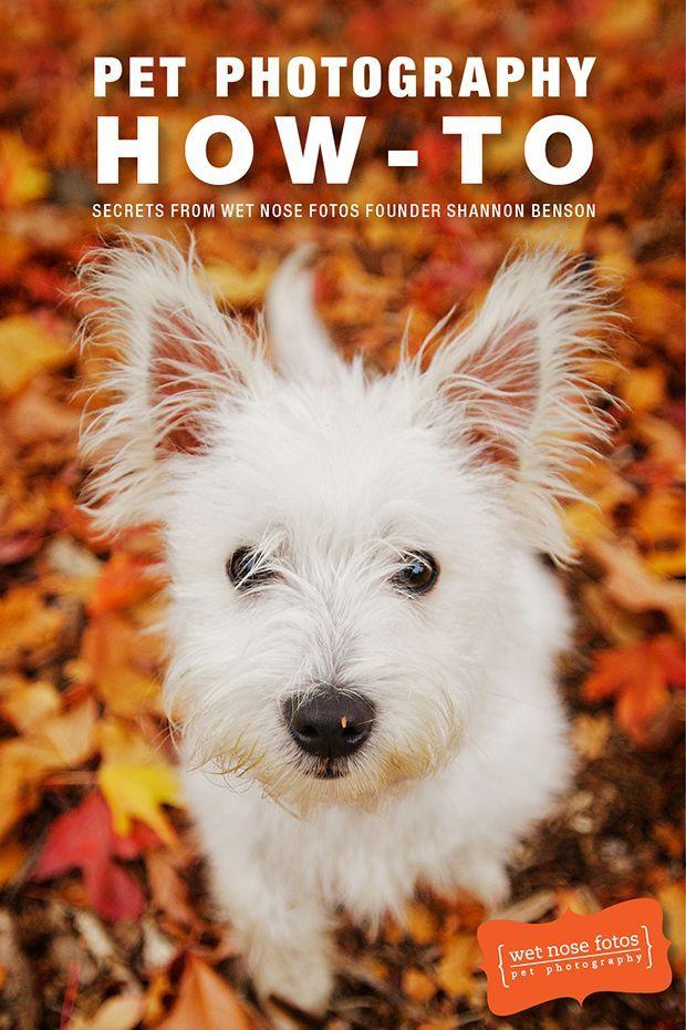 Review Pet Photography Ebook by Wet Nose Fotos Pet