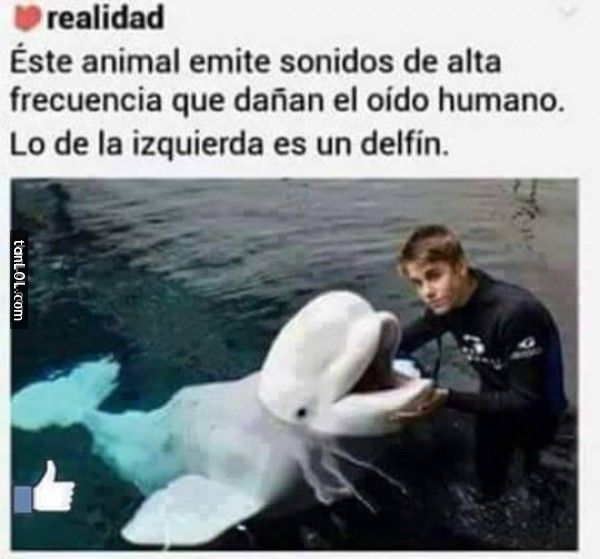 El animal es el estupido de justin biever  da asco perdon believers