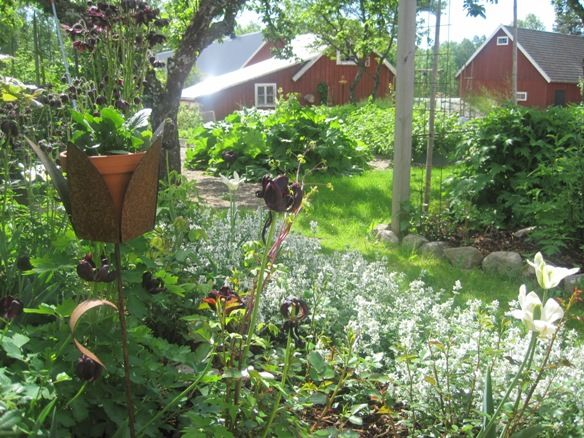 Vandra runt i vår rosenpergola och örtträdgård. Njut av dofterna från rosor och kryddörter som växer här.