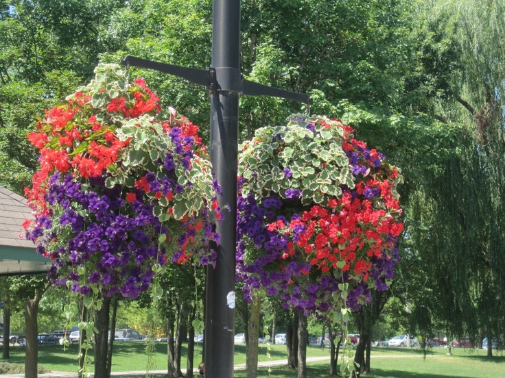 Flowers in Couchiching park in Orillia, Ontario.