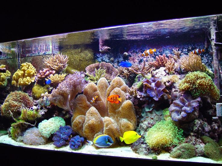 wonderful aquascaping designs with colorful coral decoration in modern square glasses aquarium ideas in home inspiration - Bett Mit Kopfteil Des Aquariums