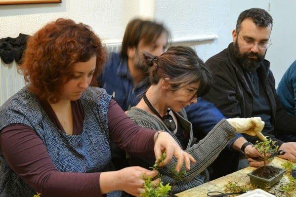 Bonsai Workshop: Η τέχνη των δέντρων νάνων - NΕΑ ΑΚΡΟΠΟΛΗ ΑΘΗΝΑΣ