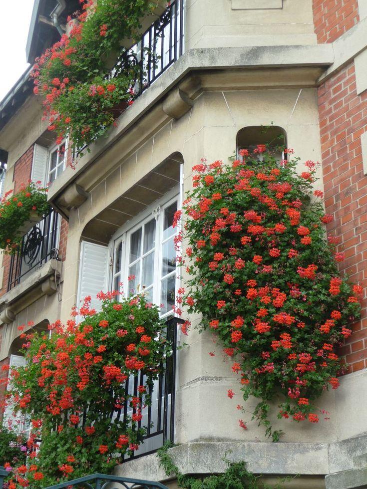 Maison fleurie de géraniums lierres, rue Saint-Vincent à Montmartre, Paris 18e (75), octobre 2010, photo Alain Delavie