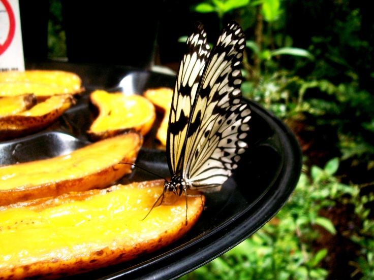 Butterfly World near Cape Town, South Africa