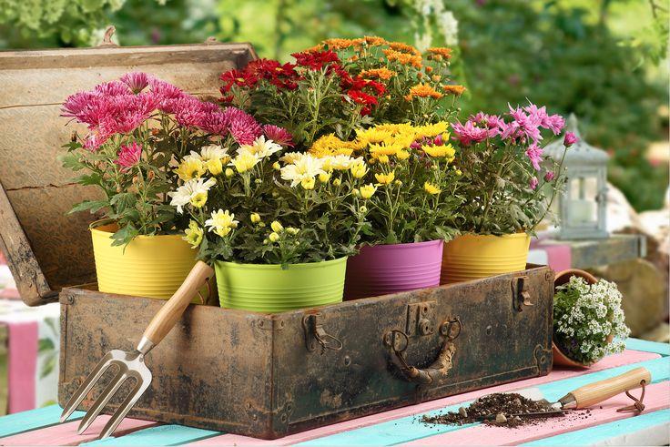 Crea un jardín súper colorido combinando plantas florales y macetas de colores, ¡súper fácil y económico! Conoce nuestras plantas florales aquí (clic en la imagen).