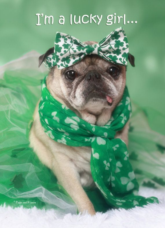 Pugs and Kisses Hey, I found this really awesome Etsy listing at https://www.etsy.com/listing/223899207/lucky-girl-st-patricks-day-pug-card-by