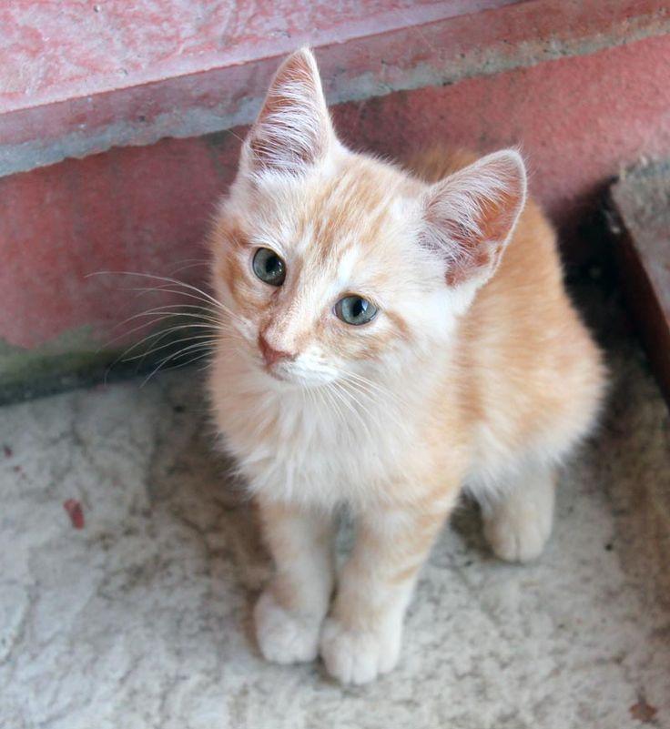 Cat Rescue Staion in Spain Our cats searching a new home!  Estepona-Katzen - Katzen in Not suchen ein Zuhause http://www.estepona-katzen.de/node/369