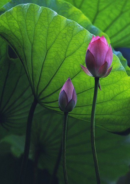 """Melody"" - © Andy Leung (Flickr)"