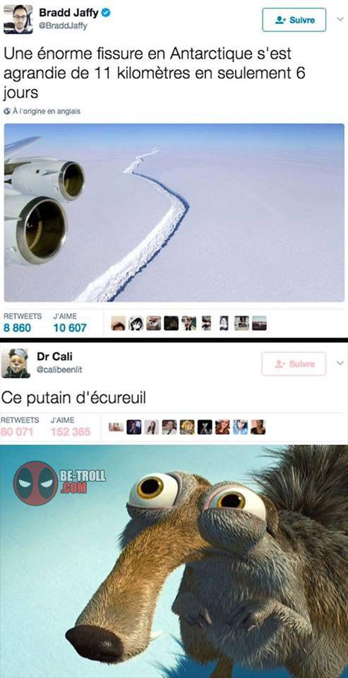 Ce fichu écureuil... - Be-troll - vidéos humour, actualité insolite
