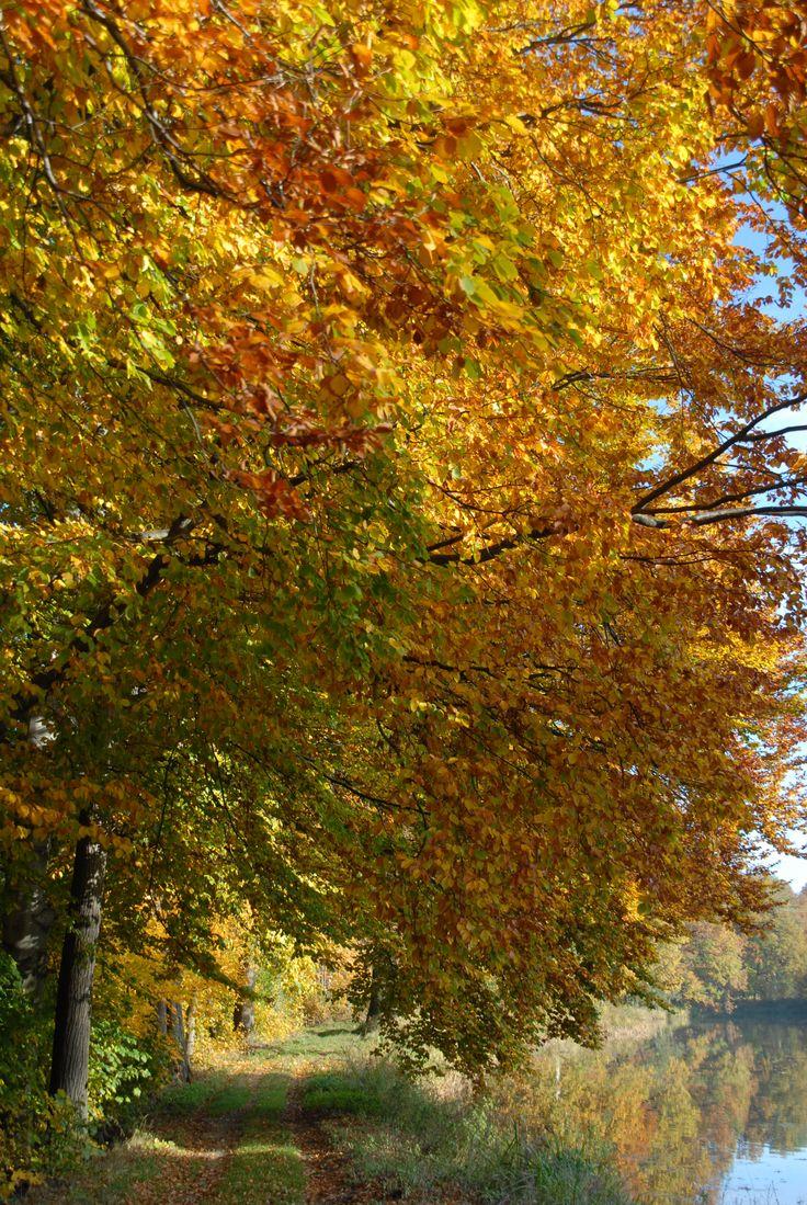 Autumn, Bukowiec