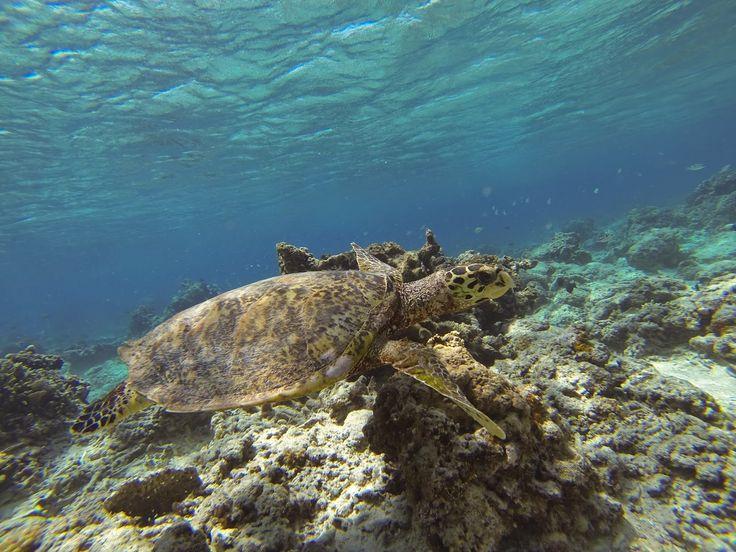 Tortuga Indonesia