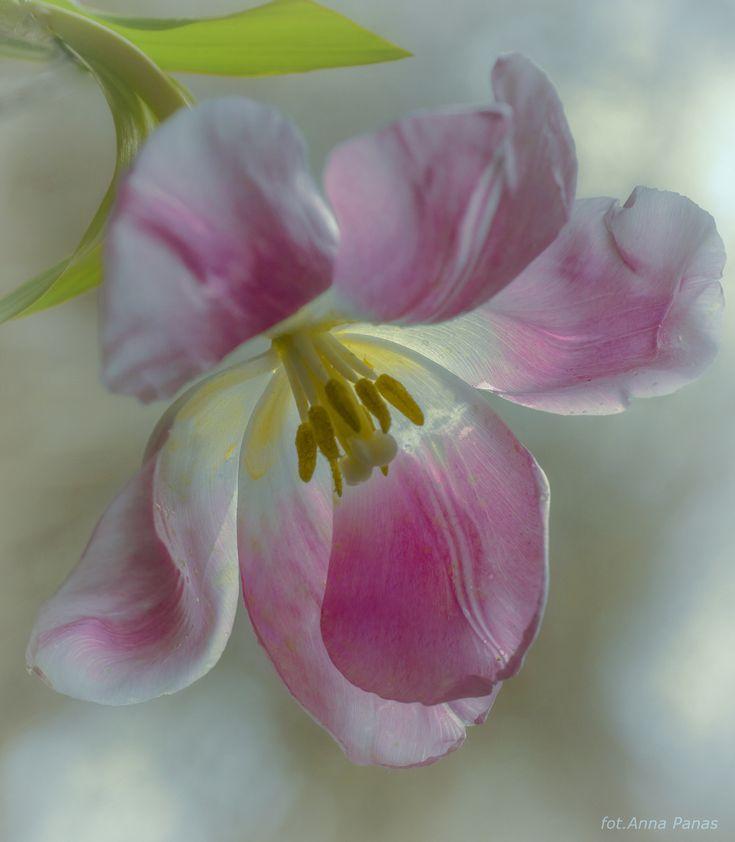 Mejores 52 imágenes de Desayunos y flores en Pinterest
