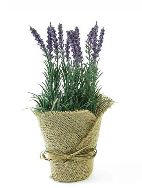 #pant #levander#flower #decoration for #home #homeliving by #ZAROS www.zarossa.gr