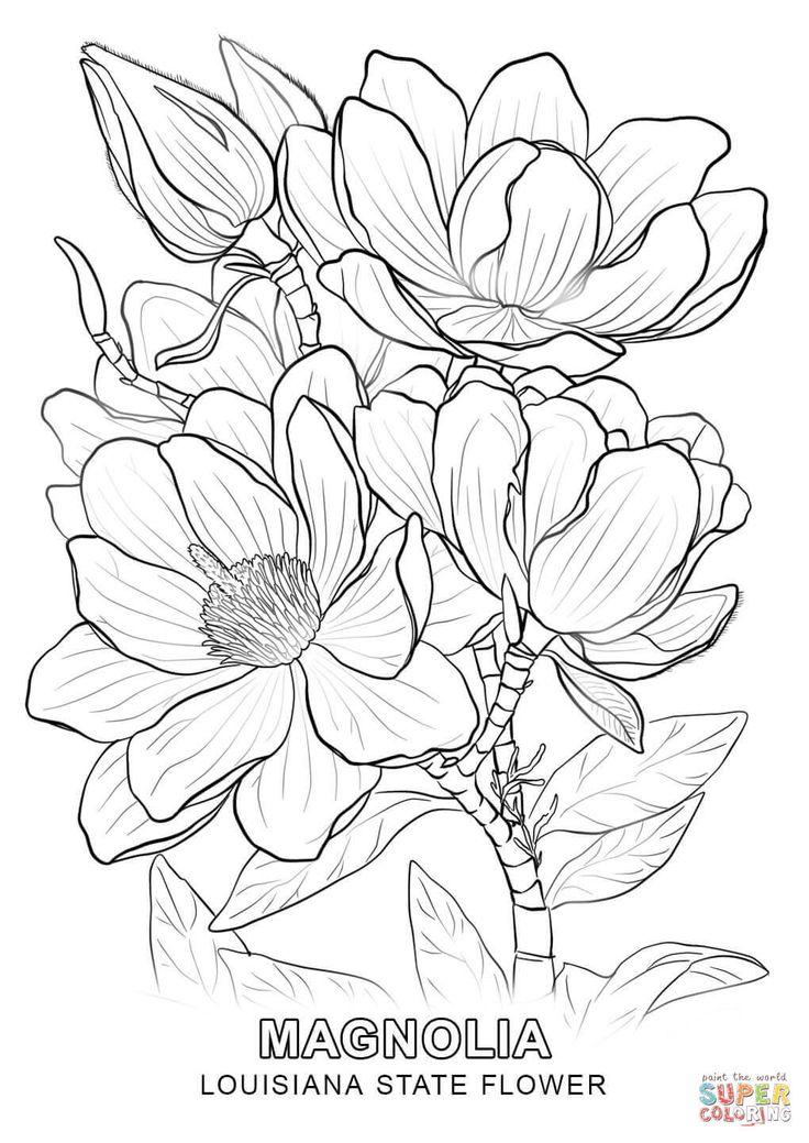 Louisiana State Flower Coloring Page