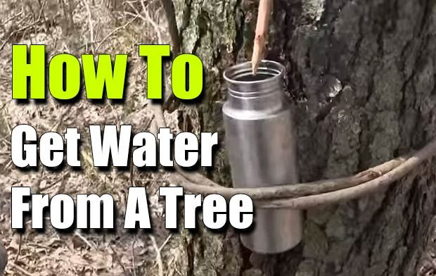 How To Get Water From A Tree, Survival, prepping, bushcraft, how to, shtf, survival water, fresh water, hack, emergency water,