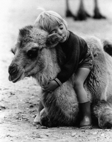A little boy hugs a camel at a wildlife park near London, UK. 1985. John Drysdale/CORBIS: