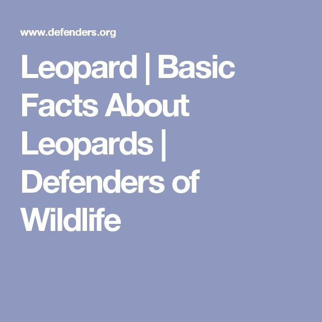 Leopard | Basic Facts About Leopards | Defenders of Wildlife