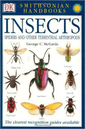 kiddiewinkles preschool best 25 insect activities ideas on bug 153