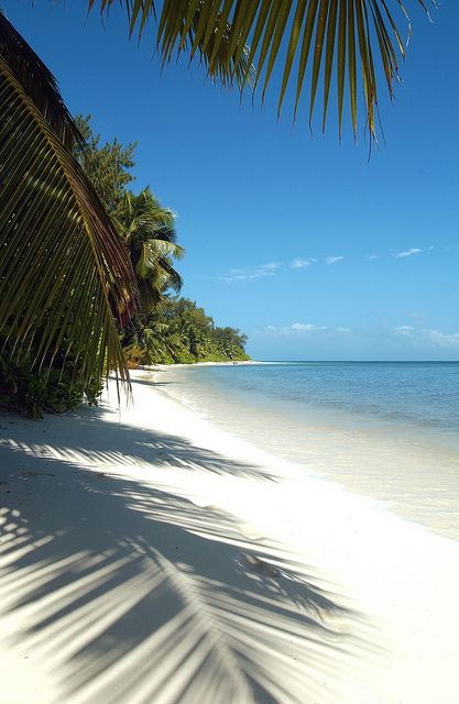 Desroches Island, Seychelles Visits are about turtle monitoring, fishing, chance sightings of killer whales. We live outside.