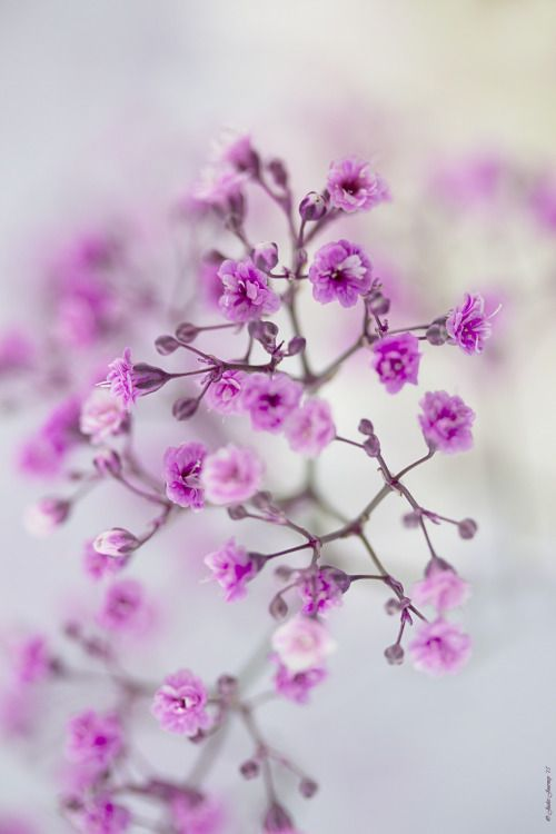202 Best Images That Soothe The Soul Soft And Subtle Images On Pinterest Gentleness Girly