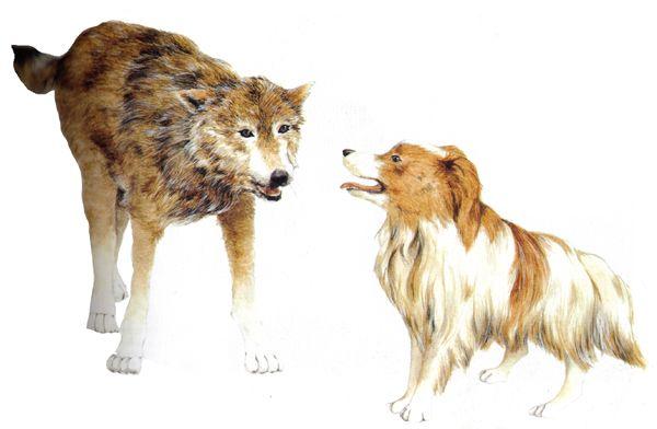 Los lobos reconciliándose con los perros http://www.encuentos.com/fabulas/los-lobos-reconciliandose-con-los-perros-fabula-infantil/