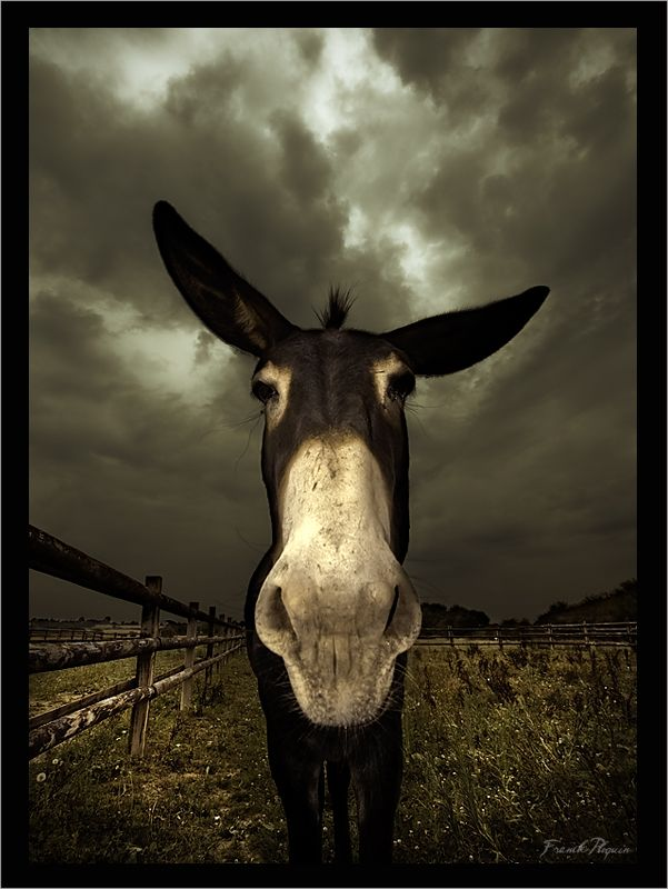 Reminds me of the donkey that lived in the pasture next to my grandparents…