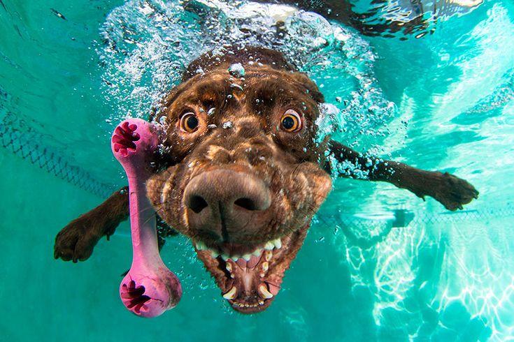 Сет Кастил снимает собак не в обычной форме, а… под водой. Эффект от снимков потрясающий!  #собаки #приколы #юмор #сеткастил #sethcasteel