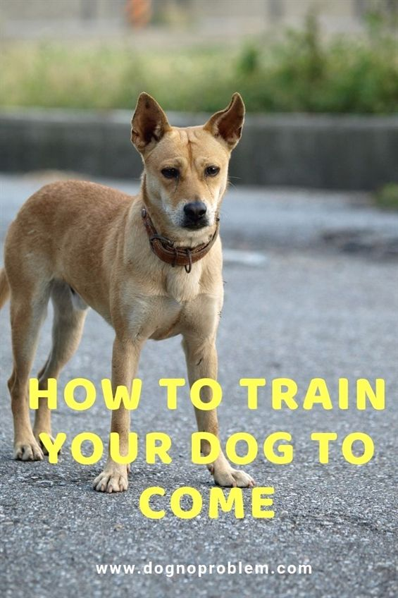 Dog Training Facility Dog Training Revolution Zak George Book