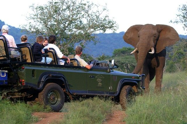 Pilanesberg Day and Night Drives