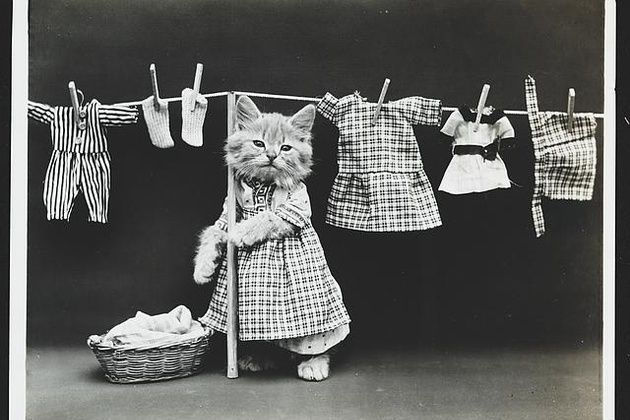 Existau fotografii cu pisicuțe și cățeluși în hăinuțe cu un secol înainte de Reddit, de  Harry Whittier Frees 1914, via LOC | VICE Romania