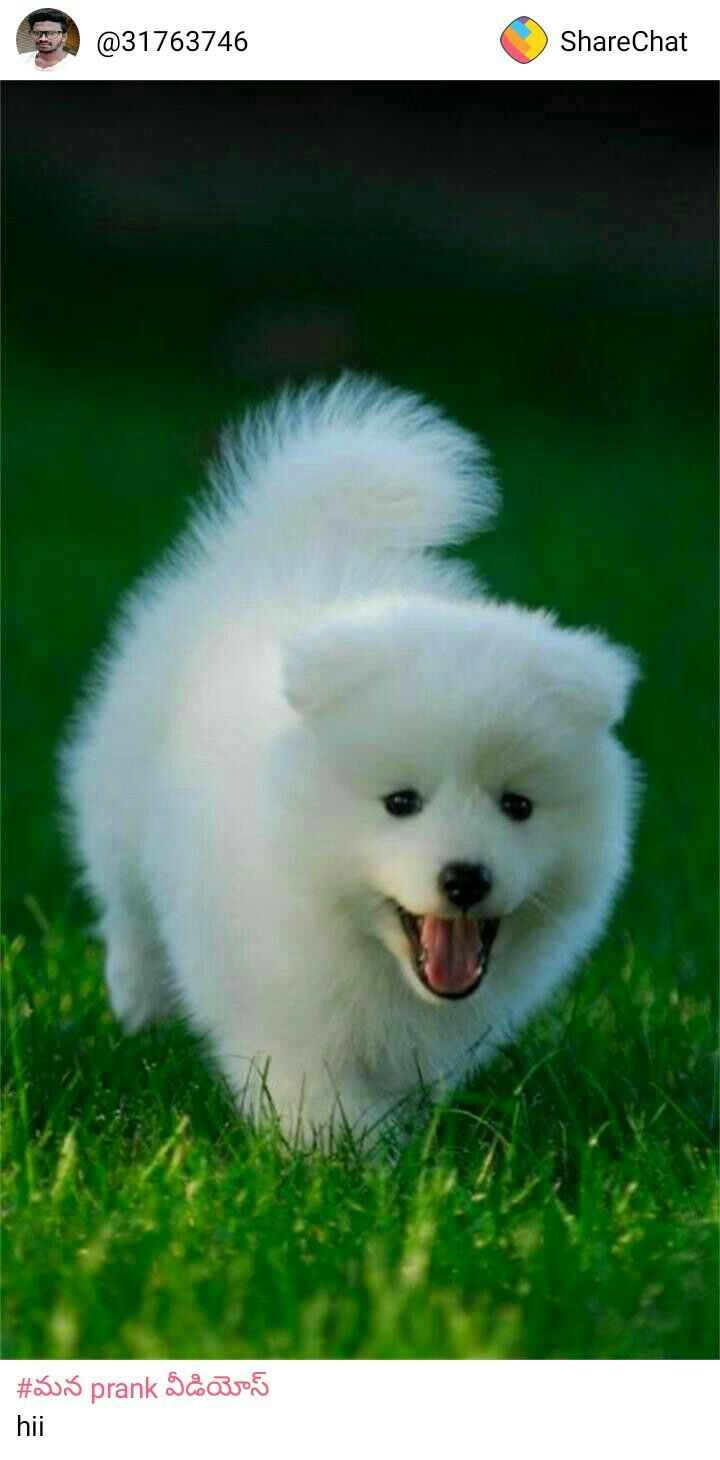 Pin By Raviteja On Share Chat Cute Dog Pictures Cute Puppies Puppies