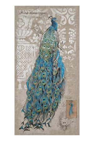 Peacock on Linen 1 Art Print by Chad Barrett at Art.co.uk