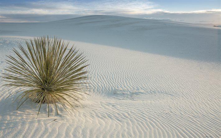 Scarica sfondi deserto, sabbia, dune di sabbia, USA, San Miguel, Nuovo Messico, White Sands National Monument